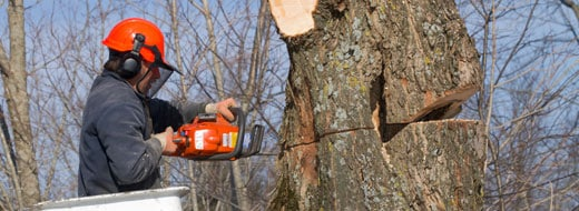 Tree Removal and Lawn Care Services for Howard County MD
